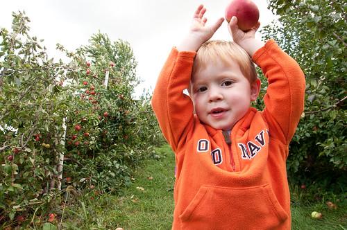 Orchard-8