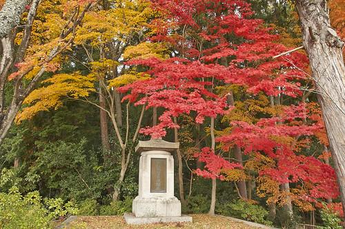 【写真】紅葉 : 海住山寺