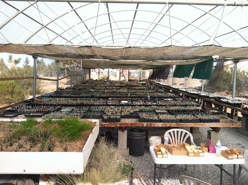 Tim Jackson's greenhouse