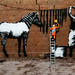 Banksy zebra  (Last Banksy image. Ran out of models.) by Lorraine1234