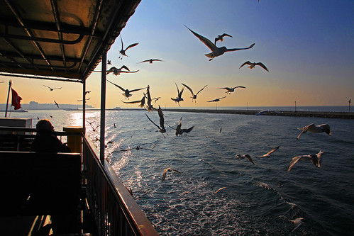 Chasing The Ferry, Istanbul, Turkey