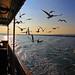 Chasing The Ferry, Istanbul, Turkey by ozdenugu