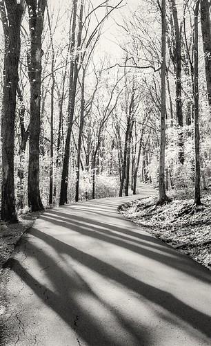 road morning trees blackandwhite sun white black film leaves forest 35mm silver woods shadows minolta bright path brush foliage trail gelatin