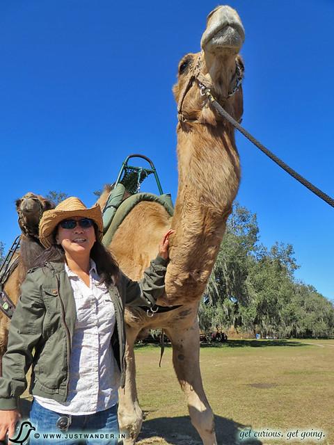 PIC: Maya with the camels at Giraffe Ranch