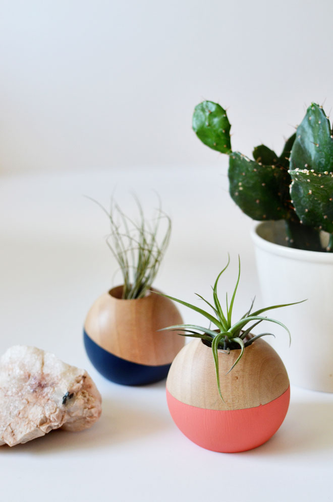 diy colorblocked air plant pot cakies
