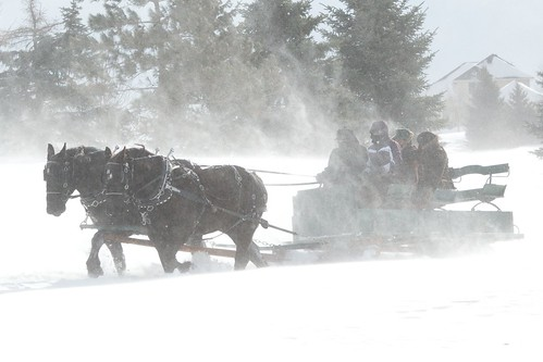 2014 Sleigh and Cutter Festival