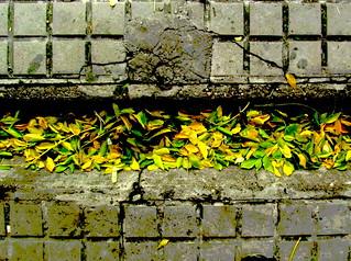 Canaleta de hojas