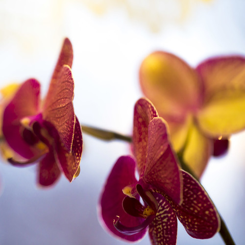 02-14 February Orchids-0494-1
