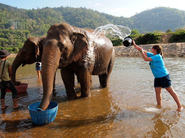 Elephant baths at Elephant Nature Park in Thailand