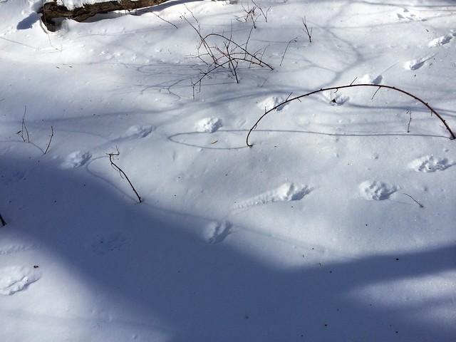 月, 2014-02-17 14:04 - コヨーテの足跡