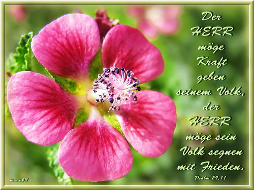Segnen mit Frieden / bless with peace