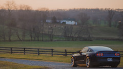 Mustang Farm Shoot