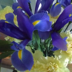 Blue iris with yellow carnations.