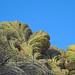 Fantastic Saguaro Crest