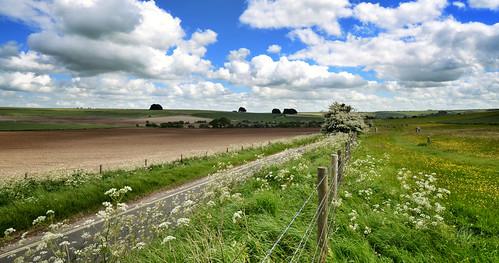 england standing countryside stones unesco wildflowers wiltshire avebury