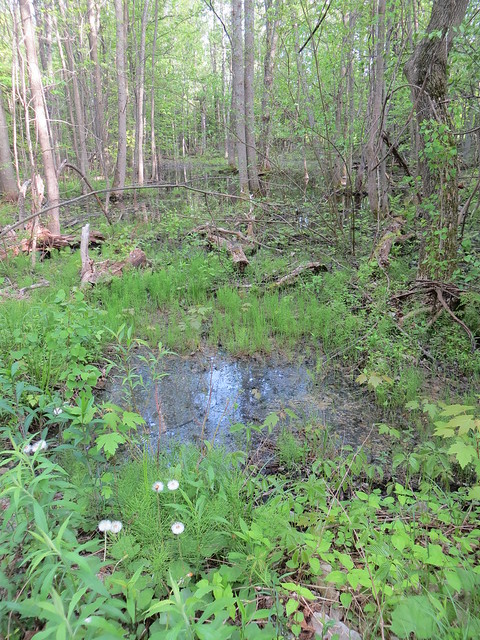 Collingwood Trails, Ontario, Canada, May 2014