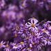 botanical gardens-010 by swardraws