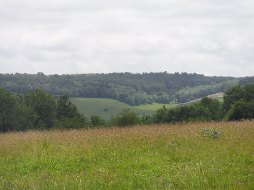 view back from Levin Down