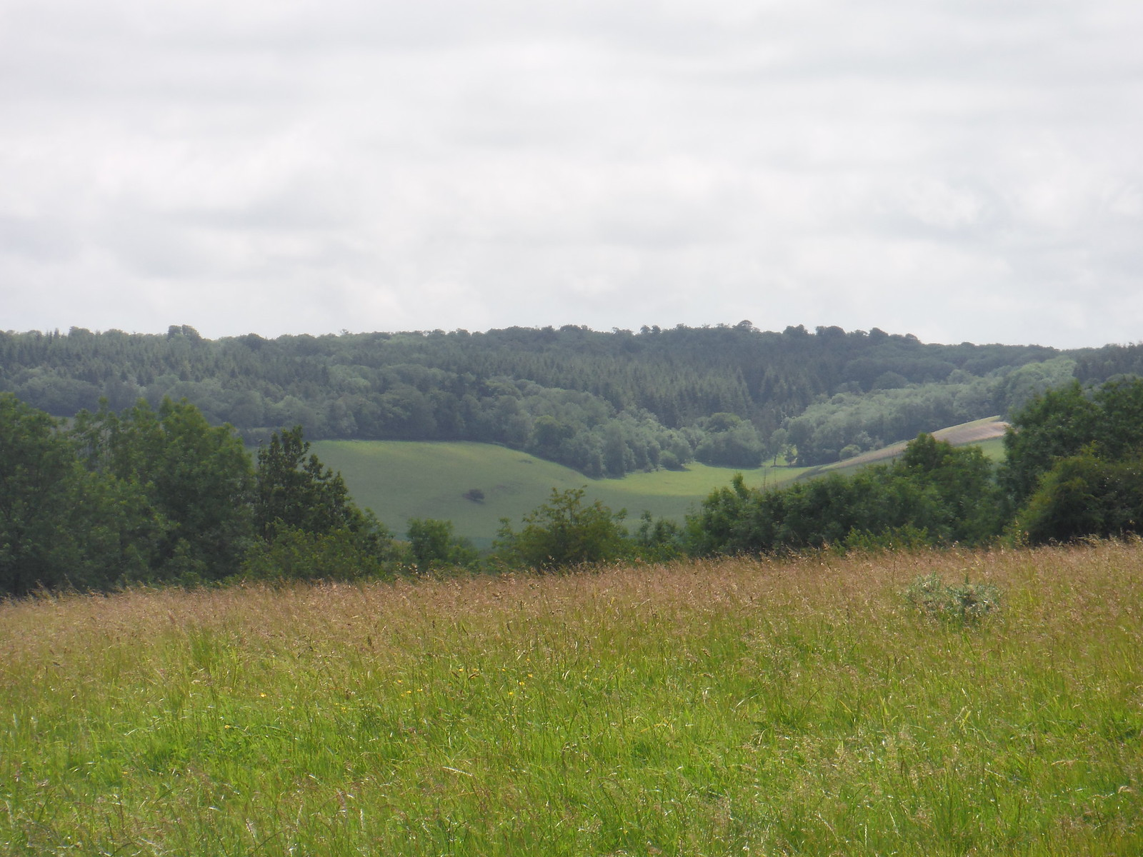 view back from Levin Down SWC Walk 239 Halnaker to Chichester via Cass Sculpture Park and Goodwood