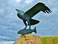 Osprey at Spey Bay