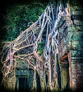 Image of Angkor Wat near Siem Reap. ankorarchaeologicalpark ankorwat cambodia decay holidays mangojouneys roots topazlabs trees