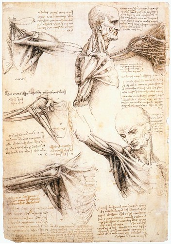Anatomical studies of the shoulder by Leonardo Da Vinci, 1510-1511