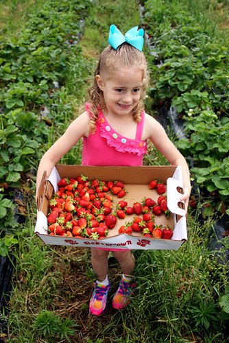 Auttie_Big-crate-of-strawberries