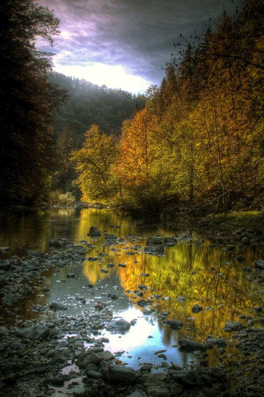 Bosques navarros de la Selva de Irati. Autor, Danel Solabarrieta
