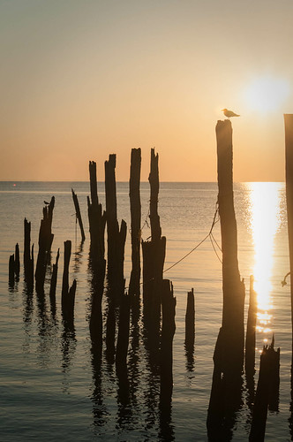 bird sunrise delaware portmahon