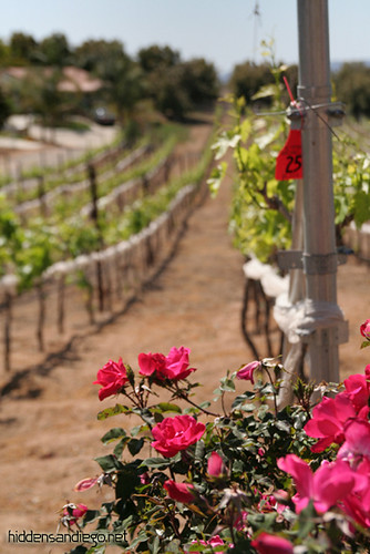 Altipiano Vineyard Escondido (3)