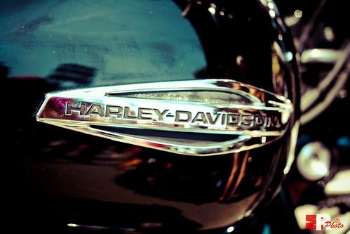 Harley Davidson logo detail