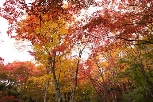 【写真】2012 紅葉 : 笠置山もみじ公園/2020-05-28/IMGP6140