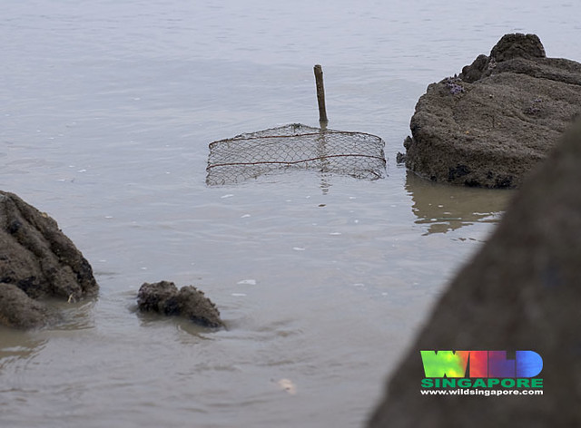 Fish trap at Changi