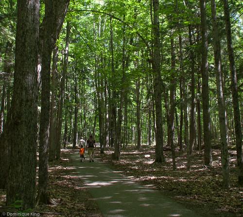 Revisiting Hartwick Pines Near Grayling, Michigan