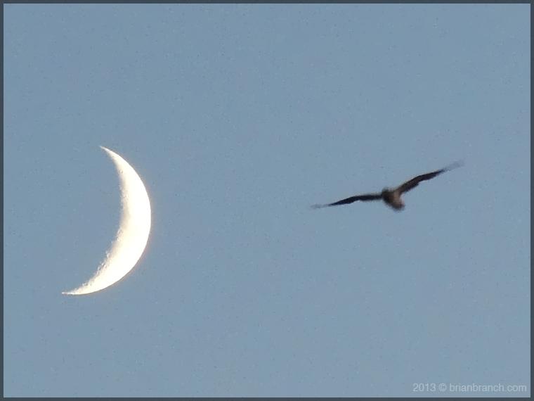 DSCN3436_bird_and_moon