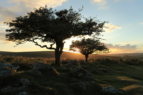 trees sunset color colour classic nature beautiful landscape day devon dartmoor hawthorn impressedbeauty canoneos5dmarkii canon5dmk11 mygearandme mygearandmepremium mygearandmebronze mygearandmesilver mygearandmegold mygearandmeplatinum mygearandmediamond photographyforrecreationeliteclub manfrotto441carbonone