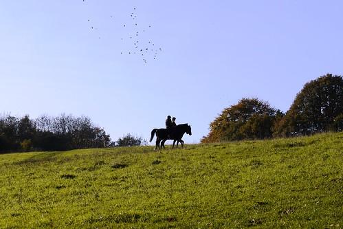Near Meenfield Wood