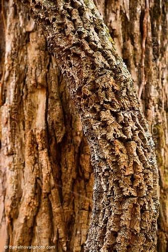 two abstract detail tree nature closeup virginia nationalpark chaos unitedstates hike trail bark va curve shenandoah frontroyal