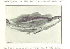 """British Library digitised image from page 223 of """"From Edinburgh to the Antarctic : an Artist's notes ... during the Dundee Antarctic Expedition of 1892-3. ... With a Chapter by W. S. Bruce, etc"""""""