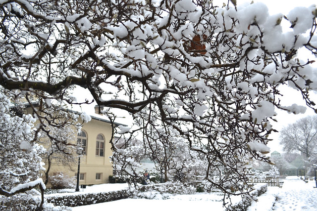 Magnolia Plaza covered in snow. Photo by Blanca Begert.