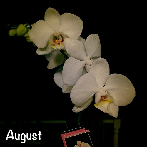 August- Housewarming Orchid