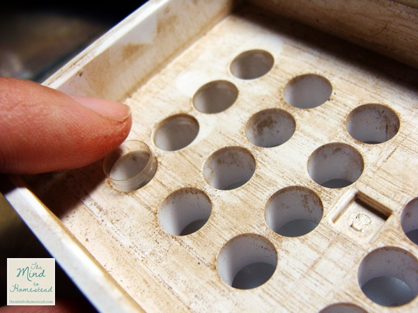 Making Your Own Medicine Capsules - The Mind to Homestead