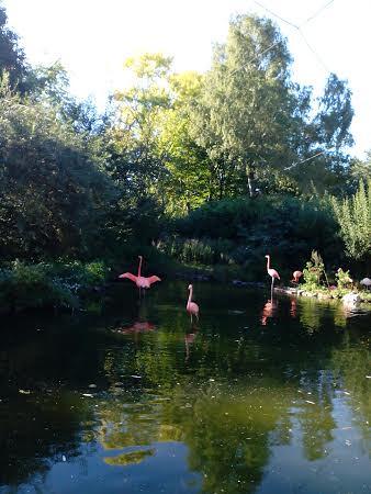 Flamingos Gruga-Park