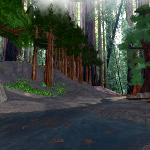 redwoods by Kara 2