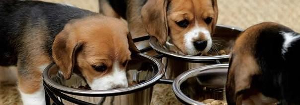 Cinco consejos para tener un perro sano y feliz en casa diario ecologia - Perros para tener en casa ...