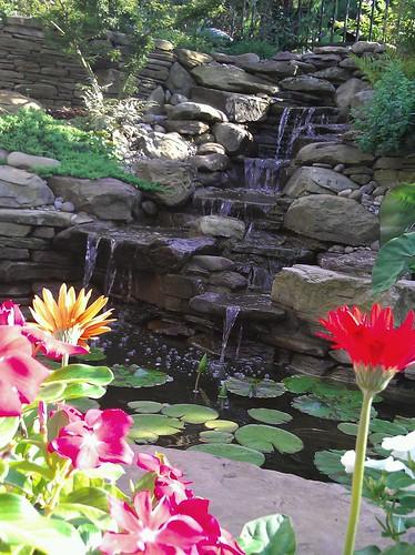 backyard pond sanctuary