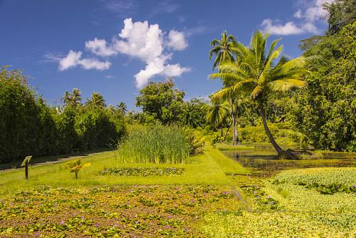 flowers tahiti tropicalgarden vaipahi ataiti thewatergardensofvaipahi