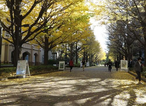 青山學院大學中美麗的銀杏大道