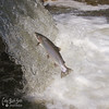 Bowmanville Fish Ladder