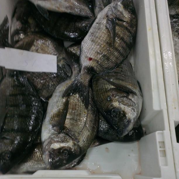 Como reconocer un pescado fresco.